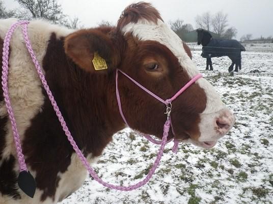 Reitknotenhalfter rosa mit Westernzügel