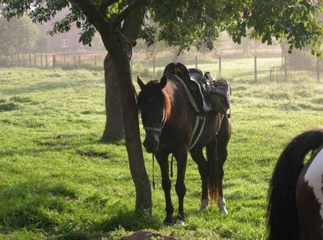 Santafee, ein Lusitano1998- der mit seinem Reiter durch dick und dünn geht- wenn sie einen Faden spinnen! geb. 1998