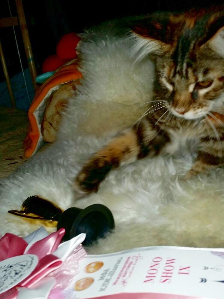 Angelica kitten карьера