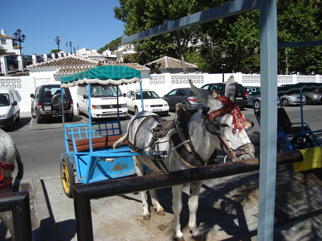 Prettily dressed up donkeys, but the taxi business wasn't doing well