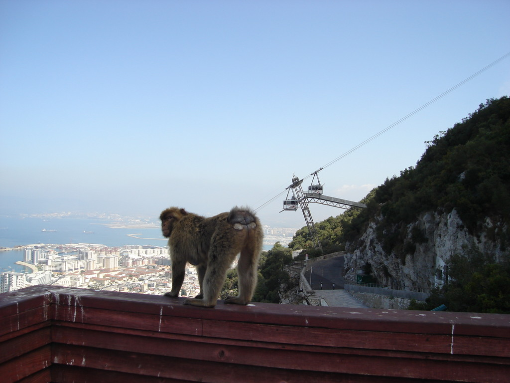 A bit less cute - this one was in front of me all of sudden while I was taking a picture of the cable car!