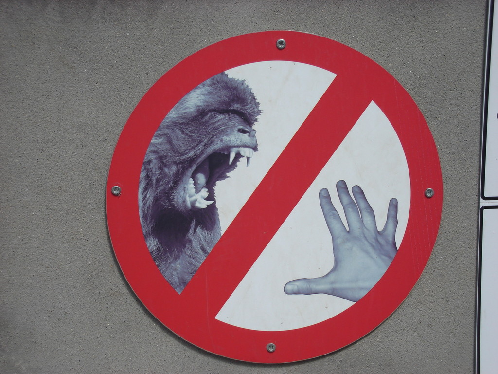 Do the monkeys know they are not allowed to bite you?