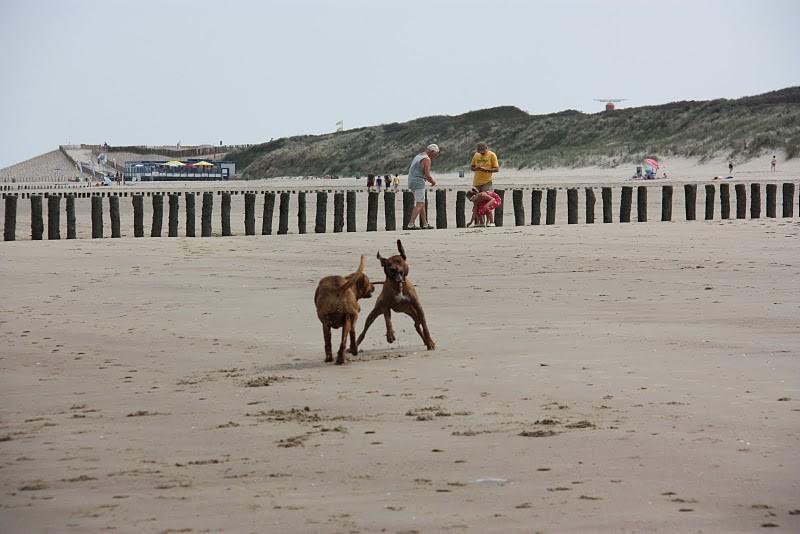rette sich wer kann...auf den Sand........