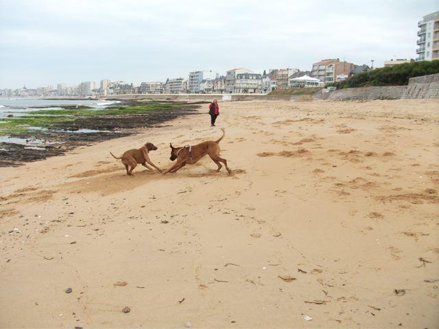 Sur la plage des Sables d'Olonne