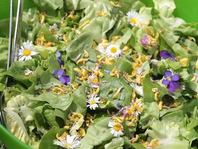 Salat mit essbaren Wildblumen-Blüten