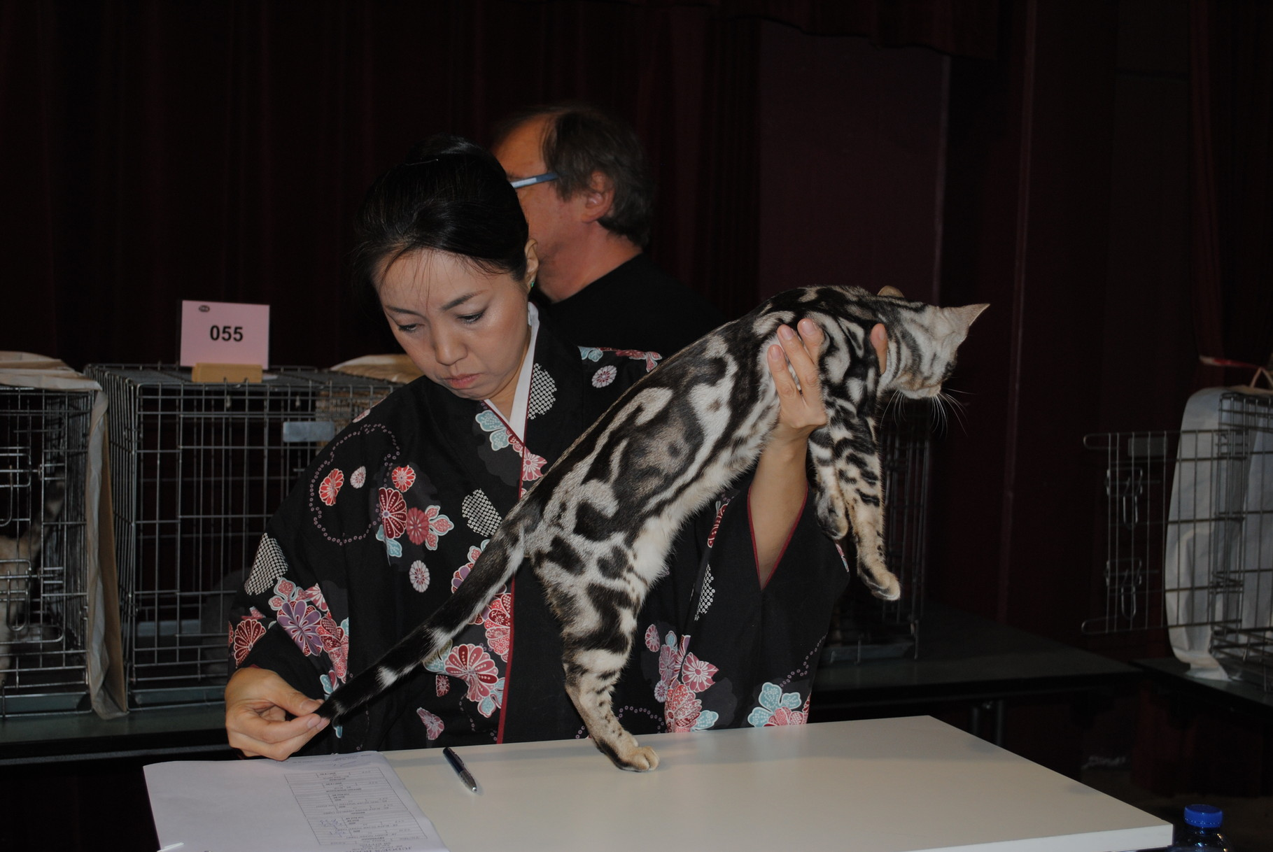 19/04/2014 Colfontaine (TICA ring 3) Fist in Colour - First in Devision - Second Best of Breed
