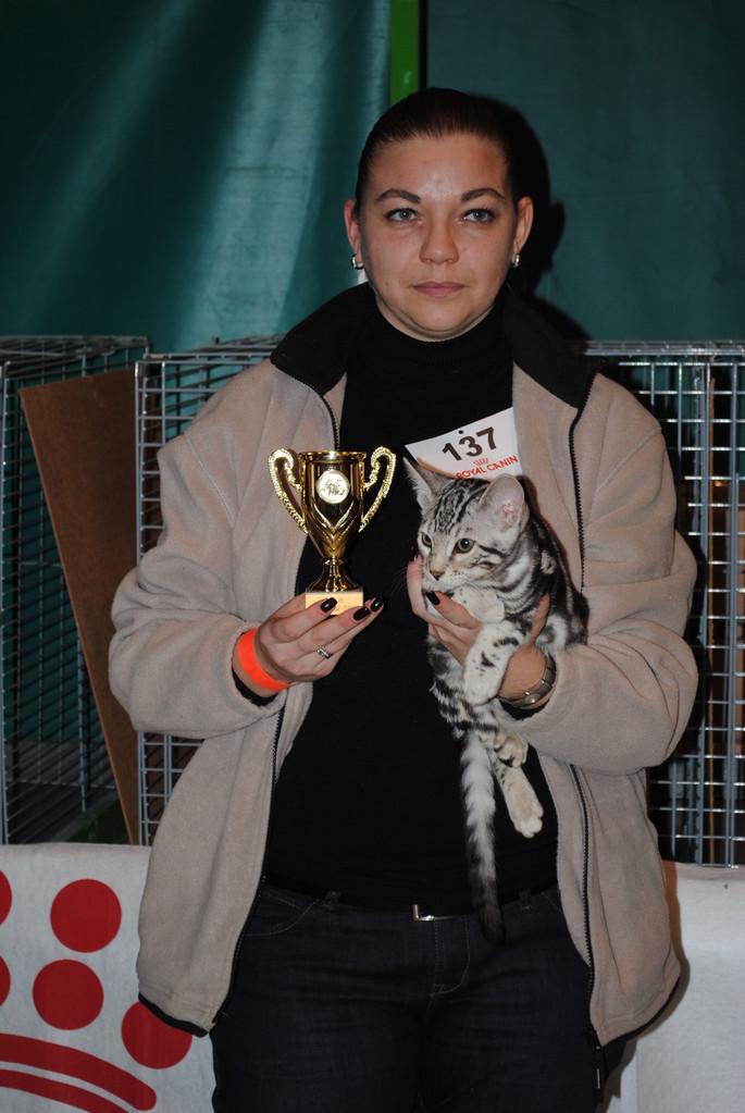 WCF 27/01/2013 Ringkeuring Special Silver: 4e plaats van totaal 63 deelnemende katten en kittens +  Traditioneel EX 1 + Nom BIS