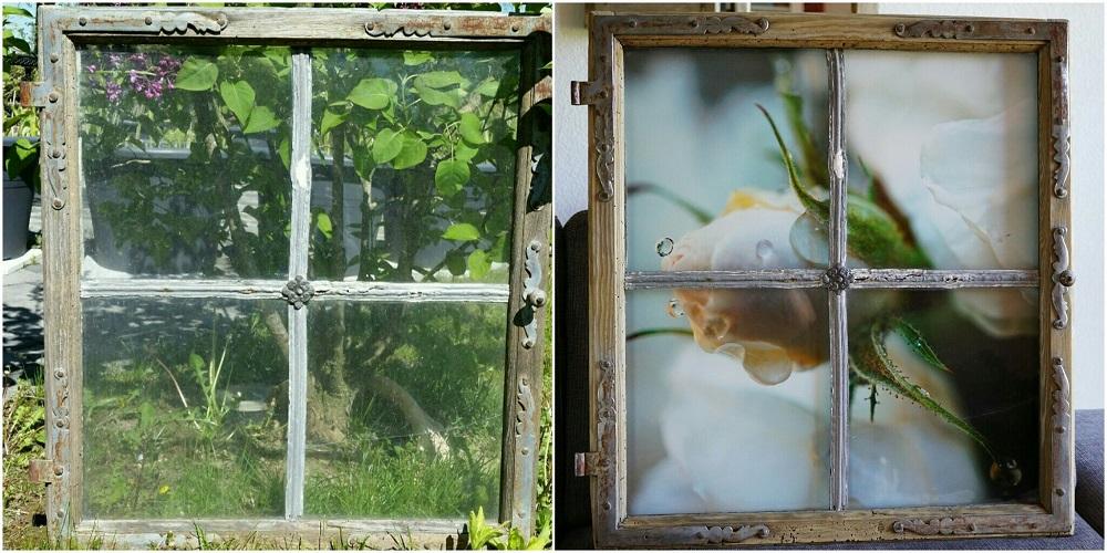 aufgefrischtes uraltes Fenster mit Makroaufnahme Rose mit Wassertröpfchen
