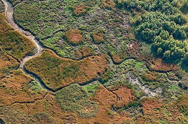 Priel im Schilfgürtel auf Hanskalbsand, rechts Auwald und grün Binsen