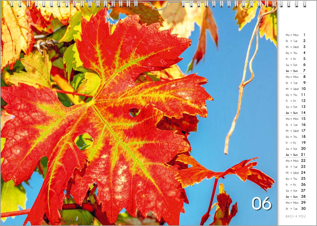 """11 Weinkalender und 99 Musikkalender ... coole Geschenke von """"Bach 4 You""""."""