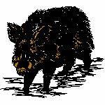 Wildschwein, 120x110 mm, 9747 Stiche