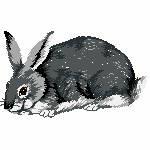 Kaninchen grau, 98x57 mm, 5918 Stiche