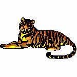 Tiger liegend, 128x70 mm, 11528 Stiche