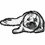 Robbenbaby, 99x52 Stiche