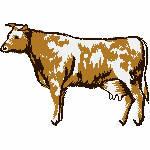 Kuh braun weiss, 99x69 Stiche