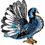 Taube blau, 127x133 mm, 10852 Stiche