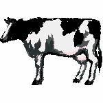 Kuh schwarz weiss, 99x66 mm, 6586 Stiche