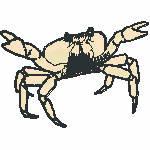 Krabbe, 98x69 mm, 11212 Stiche