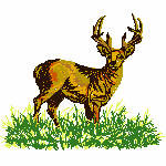Hirsch im Gras, 86x72 mm, 7550 Stiche