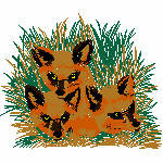 Fuchsfamilie, 113x95 mm, 9069 Stiche