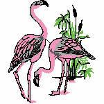 Flamingos, 127x150 mm, 10514 Stiche