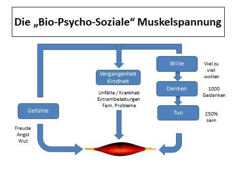 """Die Bio-Psycho-Soziale """"Muskelspannung"""""""