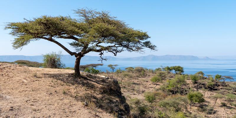 Paysage du Parc national d' Abijatta- Shalla, sud de la vallée du Rift