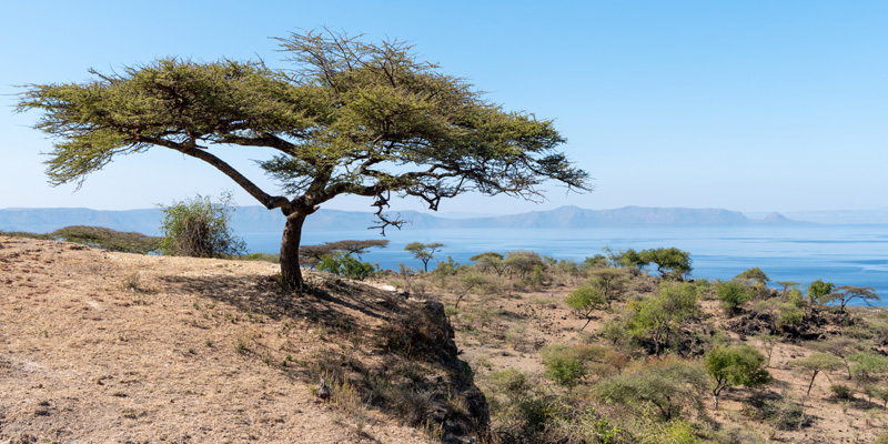 Landscape of Abijatta-Shalla National Park, Southern Rift Valley
