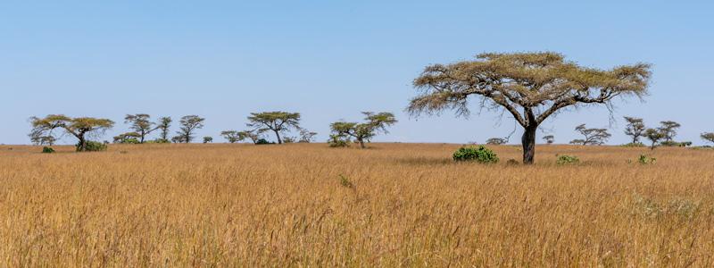 Senkele Swayne's Hartebeest Sanctuary