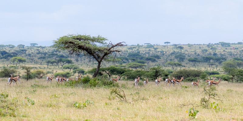 Paysage en bordure du Kénya, région étrangement encore très peu peuplée.