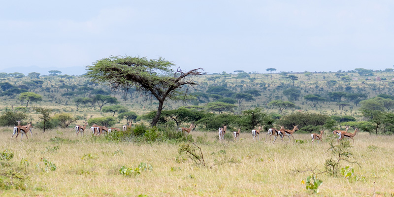 Landscape on the border of Kenya, a region that is surprisingly still very little populated.