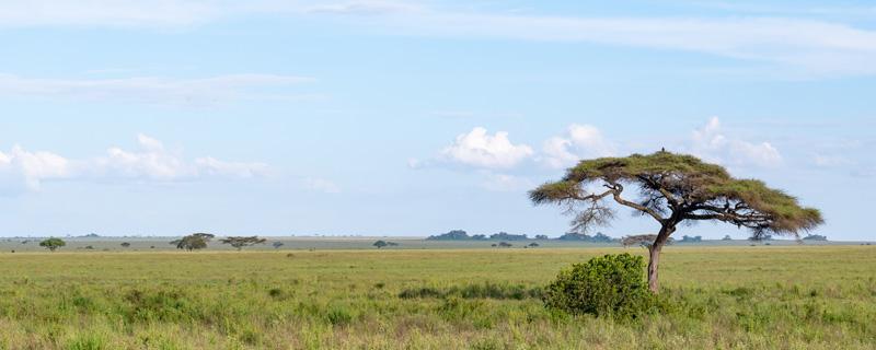 Typical landscape of the Serengeti savannah.