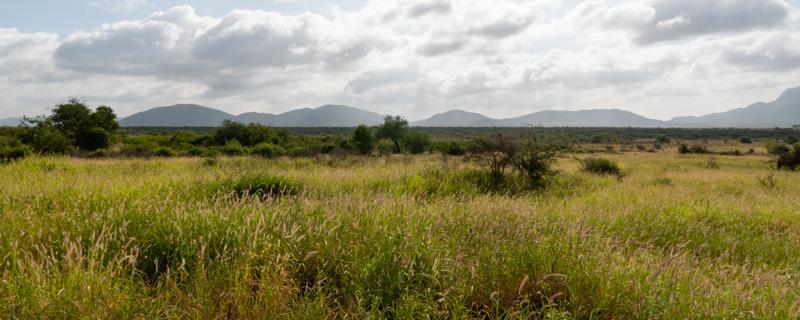 Mkomazi national park landscape