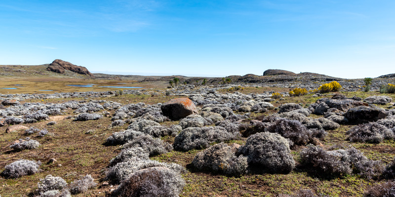 Paysage du plateau de Sanetti