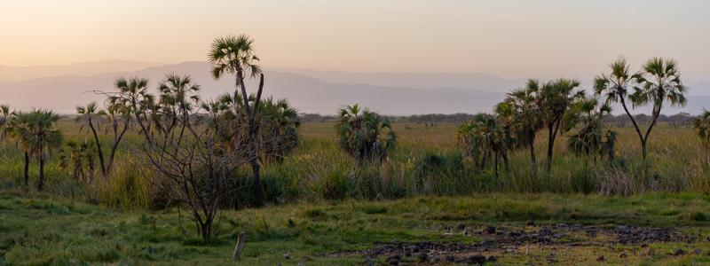 Aledeghi reserve