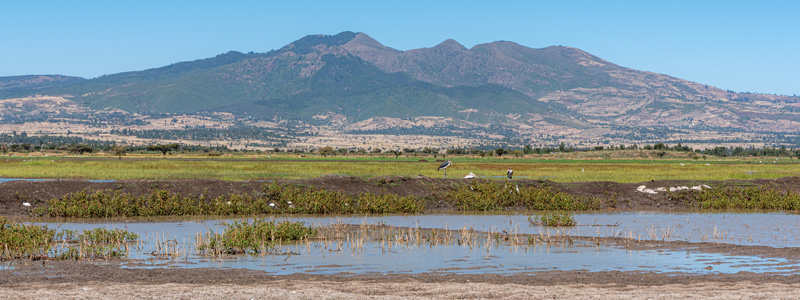 Lac Chelekleka, premier en descendant la vallée du Rift depuis Addis Abeba