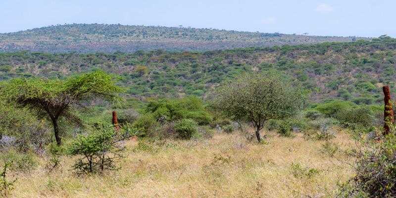 Landscape of Yabelo