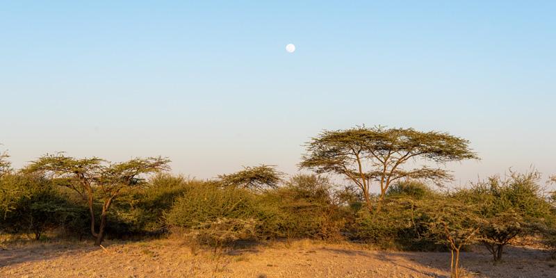 Forêt d'Acacias, Parc national d'Awash