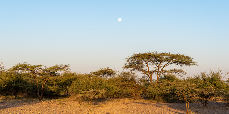 Acacias forest, Awash National park