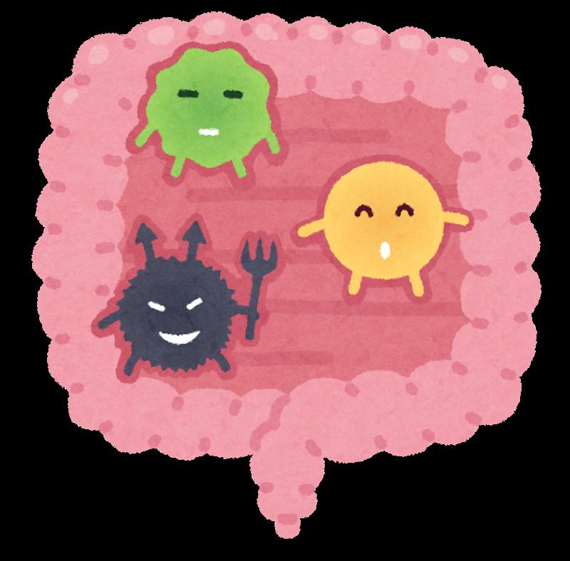 《スタッフブログ》腸内環境
