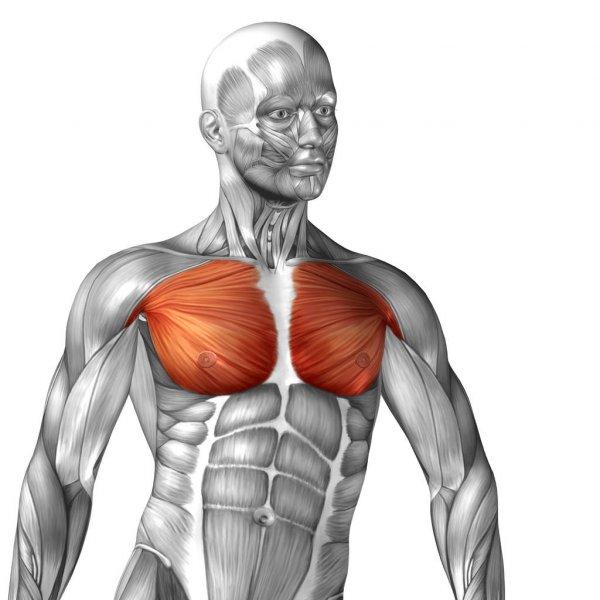 《スタッフブログ》胸の筋肉について