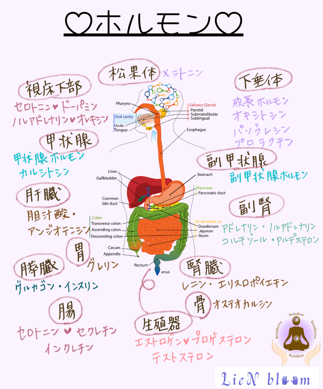 脳と腸は合わせ鏡