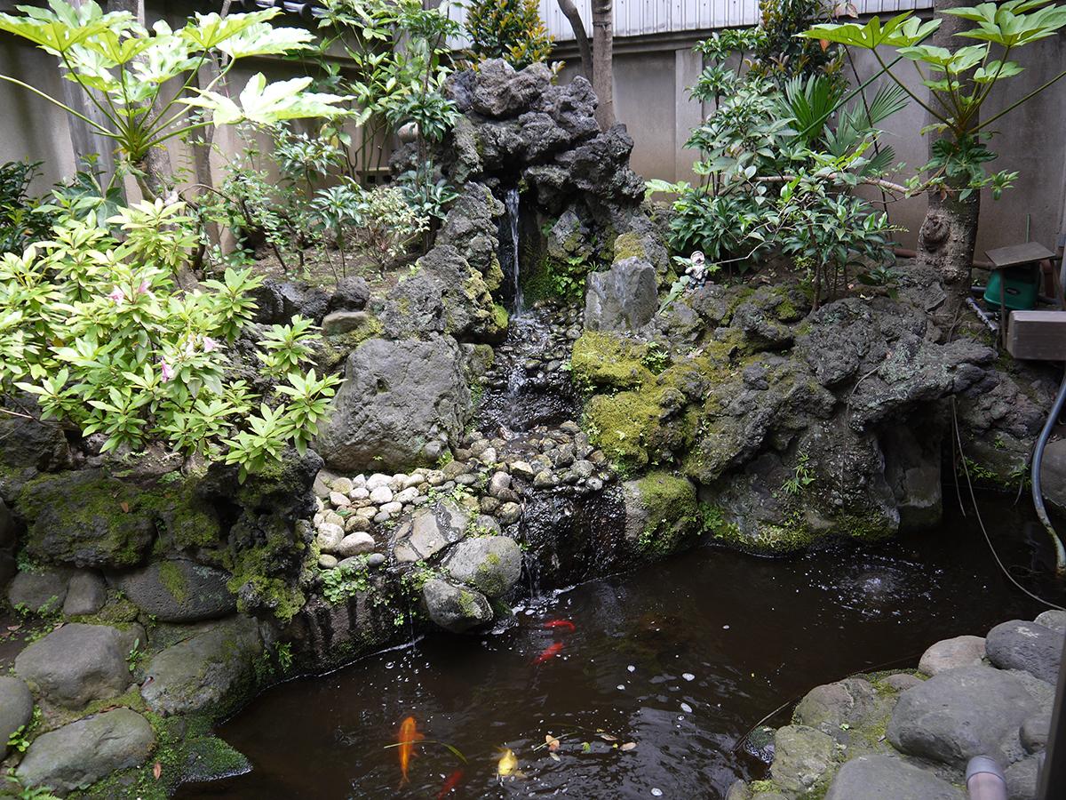 滝のある中庭で元気に泳ぐ鯉と金魚
