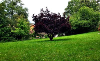 Baum, Parkvilla, Bad Heilbrunn, Garten