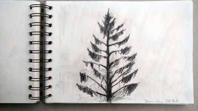 Monats-Challenge, Bleistiftzeichnung, Landschaft, Nadelbaum