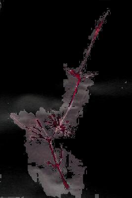Blühender Zweig, Zeichnung, digital bearbeitet