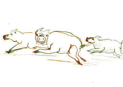 drei Schweine laufen von rechts nach links durch das Blatt