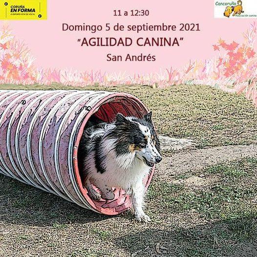 Agilidad Canina. Domingo 5 sept 2021 en San Andrés.