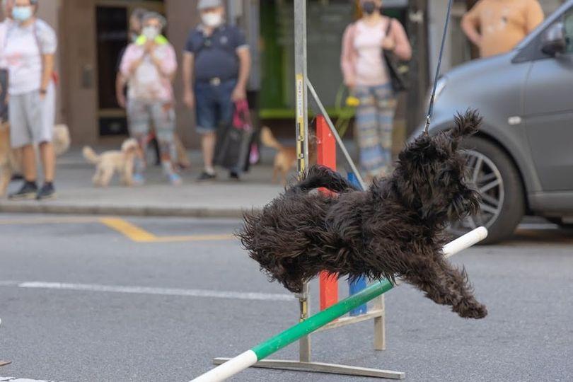 Gracias por participar en la actividad de agilidad canina