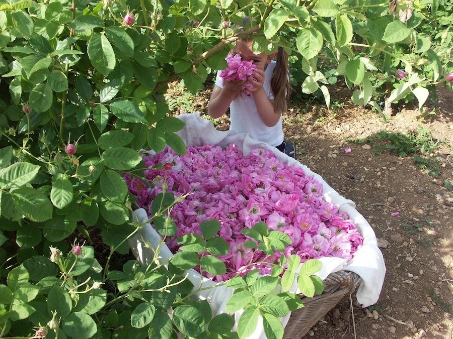 pour la beaute le jardin de la bastide